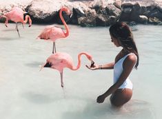 Why swim with pigs when you can swim with flamingos on this Caribbean island?