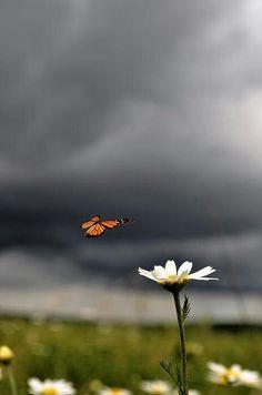 """""""A alma é uma borboleta... há um instante em que uma voz nos diz que chegou o momento de uma grande metamorfose...""""   Rubem Alves"""