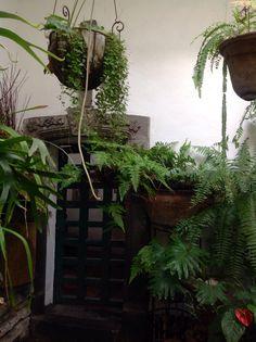 Inside the Patio of La Quinta de San Antonio, Puebla, Mexico