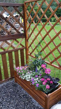 Die neuen Rankgittertröge bepflanzte ich mit Passiflora, Ipomea, Cleome, Cosmea, Surfinia, Lamium, Salvie und Verbene.