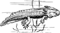Military scientists are researching on Humans Regrowing Limbs similar to what the Salamander does. This would transform the lives of those suffering from limb loss. Simple Wolf Tattoo, Reptiles And Amphibians, Hd Images, Free Pictures, Moose Art, Military, Dogs, Prints, Animals