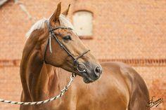 Erzurum - Featured photos - photos - equestrian.ru