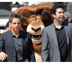 Ben Stiller & David Schwimmer get photobombed by Alex The Lion