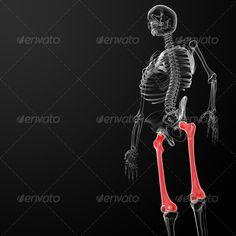 femur bone ...  ache, anatomy, arm, biology, body, bone, cage, carpal, chest, clavicle, cranium, female, femur, fibula, hip, human, humerus, illium, internal, ischium, joint, knee, male, man, mandible, medical, pain, patella, pelvis, person, phalanges, radius, render, rib, sacrum, scapula, shoulder, skeleton, skin, skull, spinal, spine, sternum, tibia, ulna, vertebrae, woman, x-ray