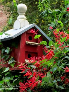 Birdhouse & Lonicera