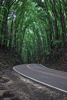 Bohol Man-Made Forest, Philippines-Beautiful landscape Bohol Philippines, Tourist Spots, Aesthetic Photo, Mountain View, Beautiful Landscapes, Charlotte Mckee, Landscape Photography, Places Ive Been, Beautiful Places