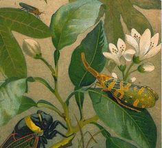 edd2699ecad6c28454ebd61af8523e79--passion-flower-printmaking.jpg (570×523)