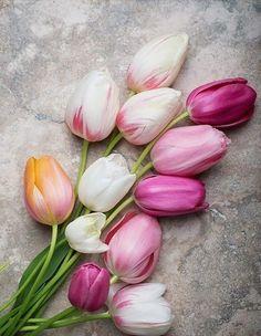Colores tulipanes                                                       …