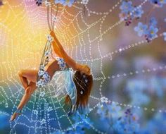 .Cobweb Fairy spinning HER beautiful web