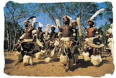 A Cultural Tour to South African Tribes - South Africa is a land mix of Legendary Tribes each with their own unique language and culture. Sourh Africa zulu tribe, tribes in africa. Jacob Zuma, African Love, African Dance, African Art, South African Tribes, Songhai Empire, Zulu Warrior, South Africa Tours, One Day Tour