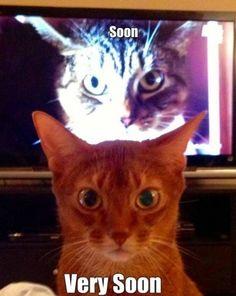 http://de.johnnybet.com/merkur-magie-eye-of-horus-spielen-1#picture$id=3387