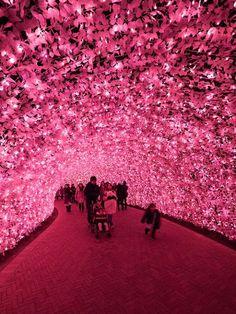 Nabana no Sato Japón - Festival de Luces