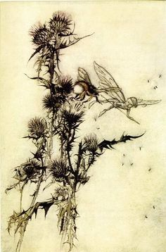 Arthur Rackham illustration from A Midsummer Night's Dream - Kill me a red hipped humble bee on top of a thistle Arthur Rackham, Le Kraken, Dream Illustration, Humble Bee, Illustration Botanique, Dream Images, Scrapbook Blog, Midsummer Nights Dream, Fairy Tales