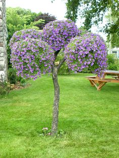 Got a dead tree in the yard? Hanging basket tree!