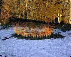 Willow Circle, Nils Udo