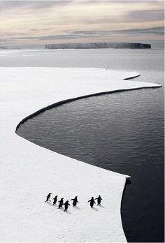 janetmillslove:  penguins ice cropped moment love