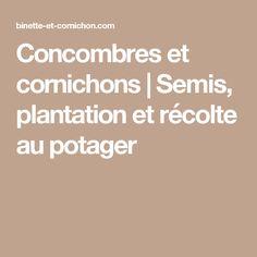 Concombres et cornichons | Semis, plantation et récolte au potager