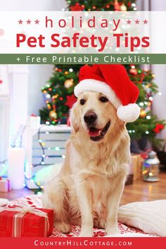 Learn holiday pet safety tips to keep cats and dosg safe during the holidays. This guide comes with a printable checklist for stress-free Christmas. Real Christmas Tree, Christmas Animals, Gifts For Pet Lovers, Cat Gifts, Bizarre Animals, Dog Care Tips, Pet Tips, Dog Crafts, Pet Safe