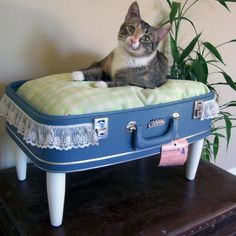 Recycled suitcase turned cat bed! Now I know what do with that old suitcase I bought at the garage sale !