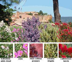 haie d corative une haie fleurie toute l ann e plans de jardin pinterest jardins. Black Bedroom Furniture Sets. Home Design Ideas