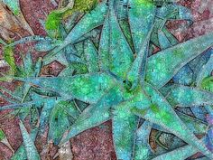 Agave Stained Glass. A succulent agave plant. Photograph edited to give a stained glass effect. These are some of my favourite colours.