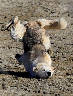 That's NOT how you do downward facing dog!