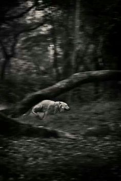 Run like a wolf. This is beautiful! There's something magical when running through the woods with my Husky :D
