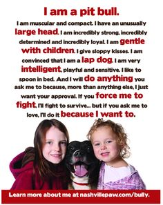 Perfect description of the Pit bull.. Anyone who doesn't agree should own one and see for themself