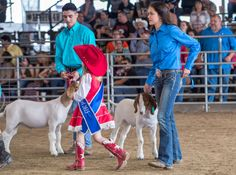 #goatvet likes these photos & item about judging #Boer #goats