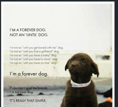 Everyone who adopts a dog should be required to learn this first.