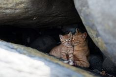This one's a heart melter. Thanks to @Patrice Hall for this link: 50 Amazing Photos From Cat Heaven Island In