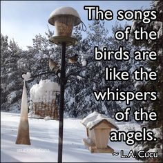 """""""The songs of the birds are like the whispers of the angels."""" ~ L. A. Cucu #quote"""