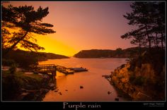 Purple Rain by Kjetil Greger Pedersen on 500px