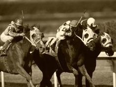 Quarter Horse racing is a great sport in FL Horse Racing Tips, Sport Of Kings, Dressage Horses, Racing News, Racehorse, Thoroughbred, Summer Fun, Riding Helmets, Creatures