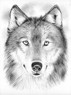 Reeves™ Medium Sketching by Numbers Wolf Pencil Drawings Of Animals, Animal Sketches, Drawing Sketches, Sketching, Wolf Tattoo Design, Wolf Sketch, Wolf Husky, Wolf Painting, Wolf Wallpaper