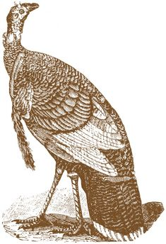 vintage... Antique Turkey Images... Turkey Engravings were scanned from an Antique Circa 1828 Printer's book. there are 3 different colors offered... sepia, red & black.