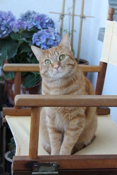 Linus, My Ginger Cat Boy with green eyes *LOVE* (Ginger-Bee)