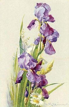 Purple iris and daisies, Catherine Klein Catherine Klein, Botanical Drawings, Botanical Illustration, Botanical Prints, Victorian Flowers, Vintage Flowers, Vintage Floral, Watercolor Flowers, Watercolor Art