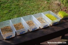 DSC_0725-RW.jpg (523×350) Food For Chickens, Keeping Chickens, Raising Chickens, Fodder System, Backyard Farming, Chickens Backyard, Chicken Treats, Hobby Farms, Chicken Feeders