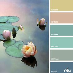 Lotus Color Palette