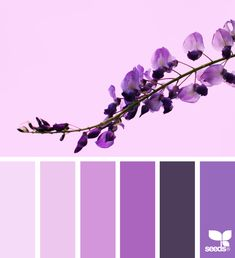 today's inspiration image for { nature tones } is by . thank you, Dee, for another gorgeous image share! Purple Color Schemes, Color Schemes Colour Palettes, Colour Pallette, Color Combos, Purple Hues, Design Seeds, Color Psychology, Color Balance, Decoration Design