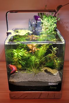 Nice nano tank, but what is really interesting is how the cascade filter case is camouflaged. Awesome idea!