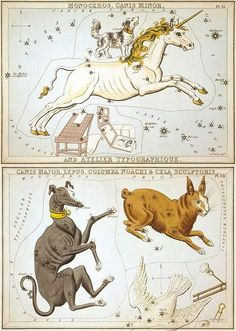 So, Canis Minor (Teumessian Fox is Firefox) and Canis Major have the same roots https://en.wikipedia.org/wiki/Urania's_Mirror and they are players.