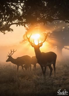 Voice of Nature : Photo