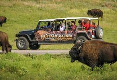 Get up and close with the buffalo at Custer State Park in South Dakota. Take the Buffalo Safari Jeep Ride for a fabulous summer adventure. South Dakota Travel, South Dakota Vacation, North Dakota, North America, Safari Jeep, Safari Photo, Architecture Design, Custer State Park, Wildlife Safari