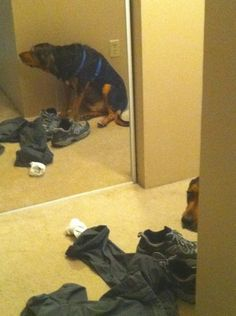 Playing hide and seek - Dog! You were so close. But the mirror ... you neglected something important.