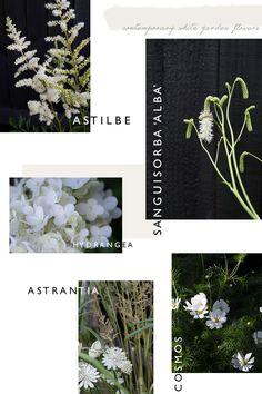 5 white flowers for a contemporary white garden. Planting scheme for a white garden