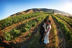 Viansa Winery Sonoma Wedding Vineyards