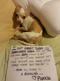 Dog Shaming features the most hilarious, most shameful, and never-before-seen doggie misdeeds. Join us by sharing in the shaming and laughing as Dog Shaming reminds us that unconditional love goes both ways. Cute Funny Dogs, Funny Dog Memes, Funny Cats And Dogs, Funny Animal Memes, Funny Animals, Cute Animals, Dog Humor, Pet Memes, Pets