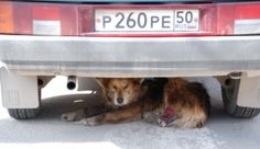 Commend Billionaire for Saving Stray Dogs in Sochi